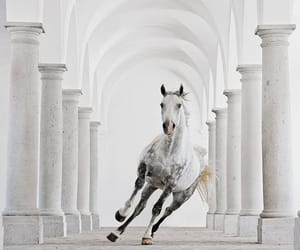 horse and aesthetic image