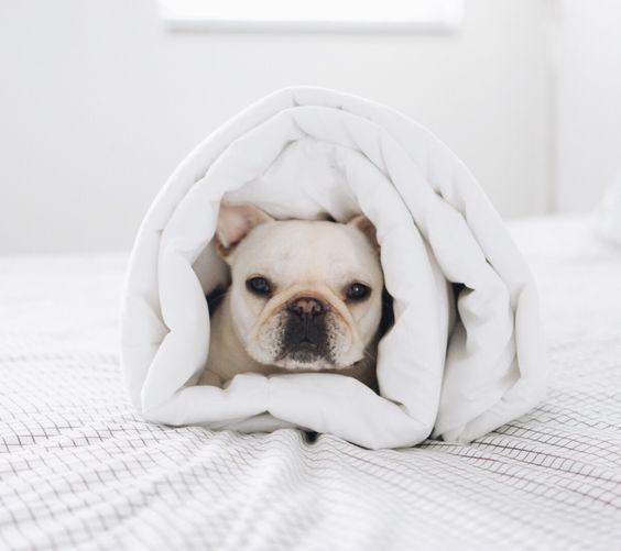adorable, burrito, and dog image
