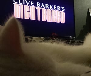 cat, nightbreed, and movie time image