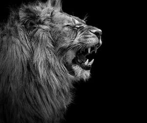 boss, cats, and fierce image