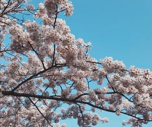 background, beauty, and blossom image