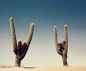 cactus, mexico, and positive image