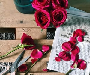flowers, morning, and rose image