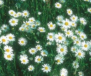 90s, daisy, and retro image