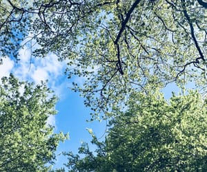 blue, green, and nature image