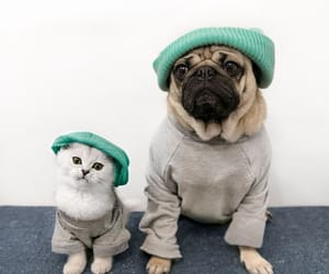 adorable, cats, and outfits image