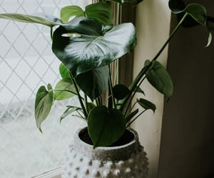 green and plant image
