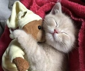 animal, cat, and kitty image