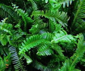 bright, ferns, and leaf image