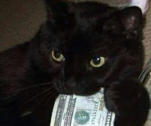 cat, icon, and money image