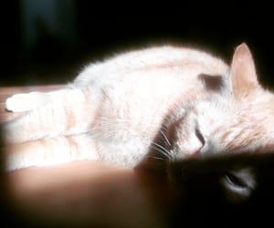 animal, czech, and animals image