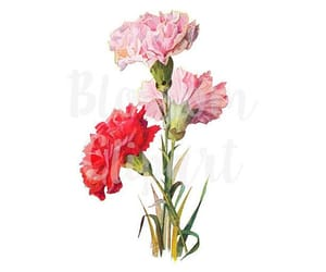 carnation, flowers, and printable image
