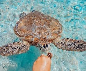beach, sea, and turtle image