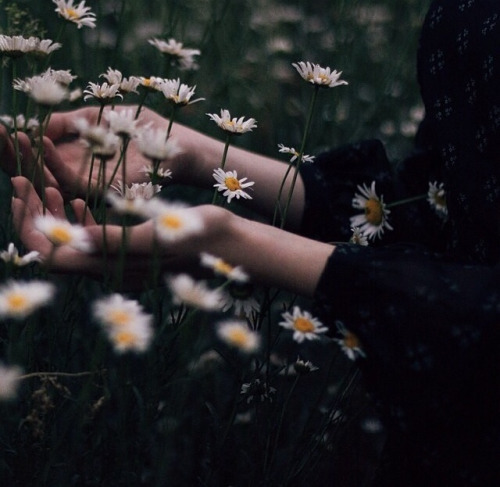 alternative, flowers, and green image