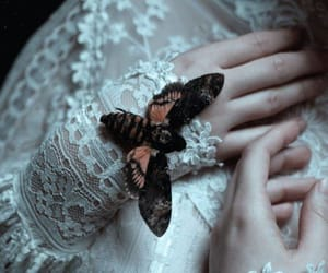 butterfly, lace, and pale image