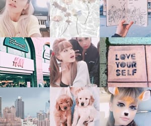 blue, dogs, and moodboard image