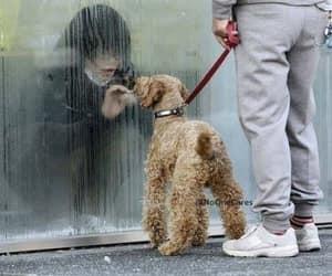 dog, photography, and seperation image