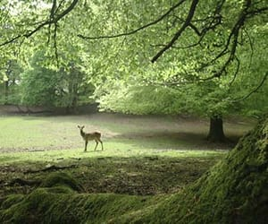 animal, deer, and green image