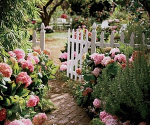 flowers, secret garden, and blossoms image