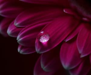 drop, flower, and red image