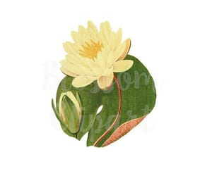 etsy, flower illustration, and lotus flower image
