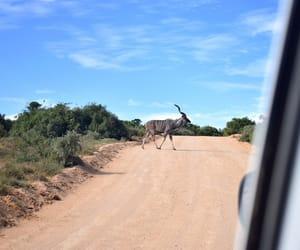 safari and south africa image