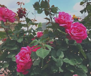 aesthetics, blooming, and flower image
