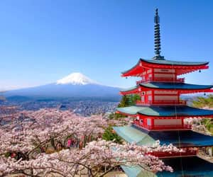 cherry blossoms, japan, and mt. fuji image