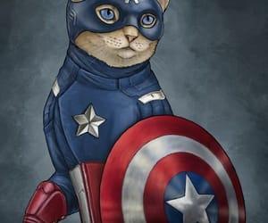 cats, heroe, and felino image