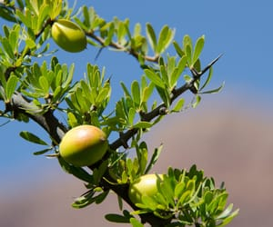 argan oil products image