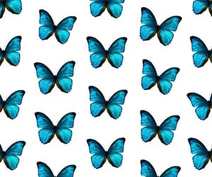 blue, butterfly, and mariposa image
