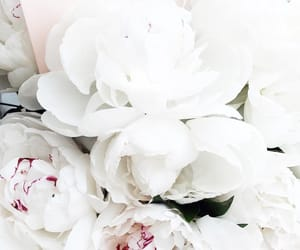 beautiful, peonies, and roses image