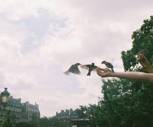 bird, vintage, and hands image
