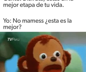 funny, gracioso, and memes image