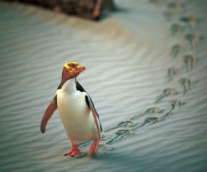 footprints, places to visit, and wildlife tours image