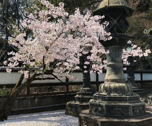 aesthetic, japan, and springs image