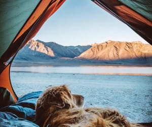 mountains, camping, and dog image