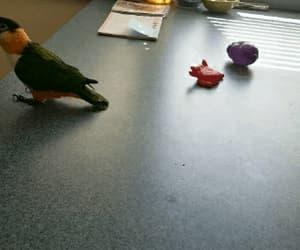bird, hilarious, and humor image