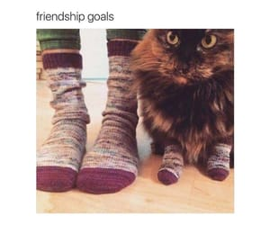 cat, friendship, and funny image