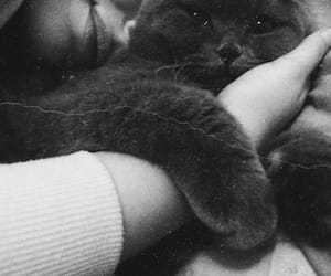 baby, cats, and inspiration image