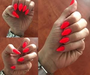 nails, springnails, and semilac image