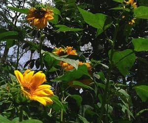 botanical, garden, and nature image