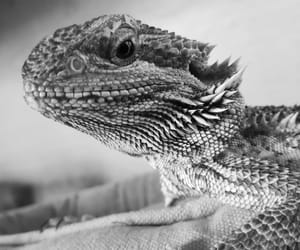 pet, photo, and black and white image