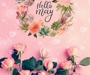colours, roses, and hello may image