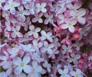 earth, flowers, and lilas image