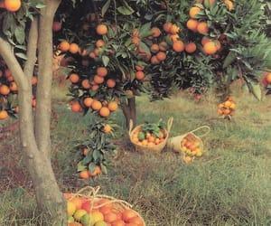 orange, fruit, and tree image