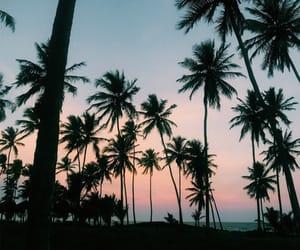 palmeiras, sunset, and pordosol image