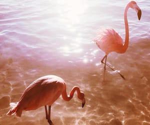 pink, aesthetic, and animals image