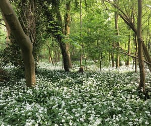 beautiful, flowers, and forest image