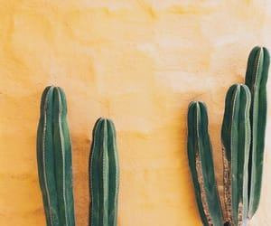 cactuses and yellow image